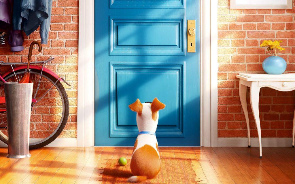 La vida secreta de tus mascotas_3